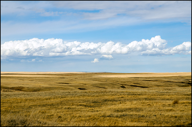 Alberta Prairies, Julia Pelish